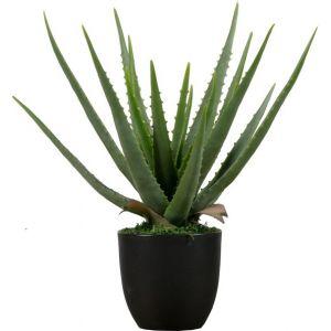 Plant Woood Aloe Vera 46cm