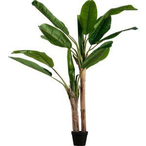 Plant Woood Bananenplant 2 Stam 138cm