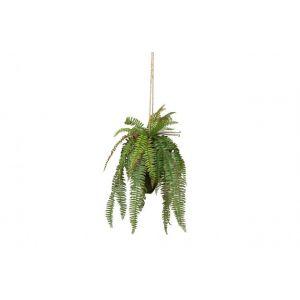 Plant Woood Varen Hangend 58cm 375139-G